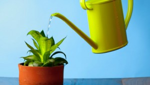 water filter for plants